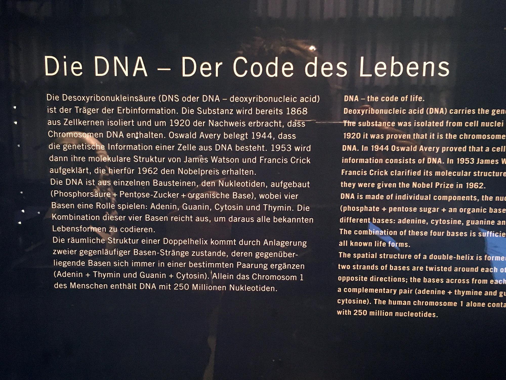 Tafel: DNA im Museum für Naturkunde, Berlin ©K. Schwahlen 2019